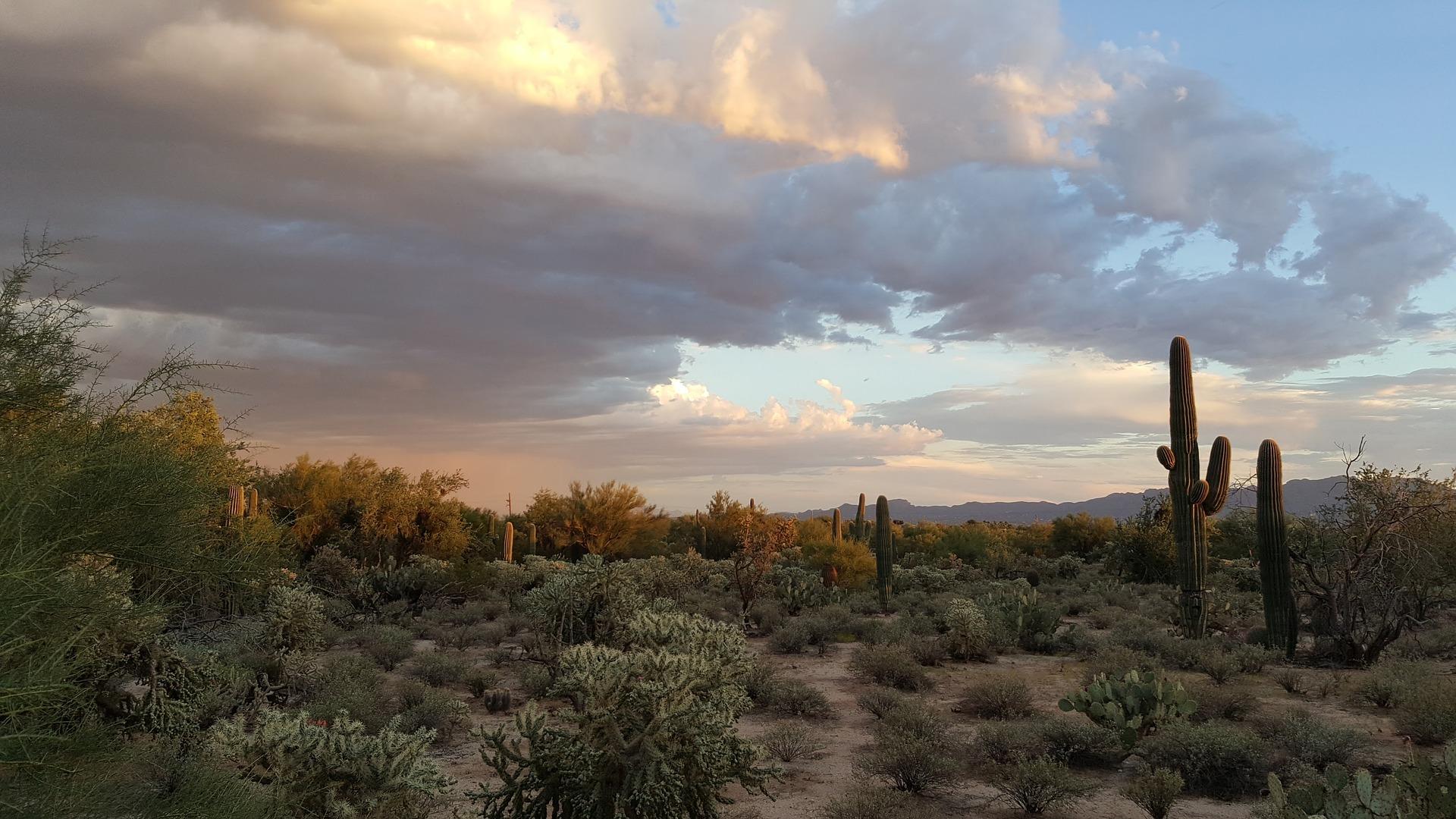 saguaro-2714995_1920